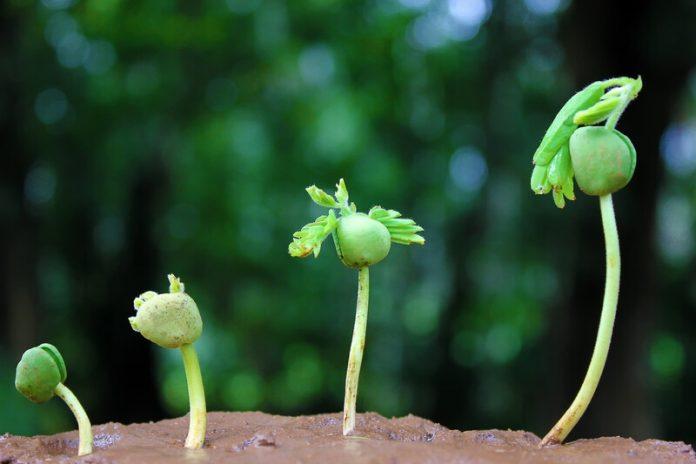 faith like a grain of mustard seed